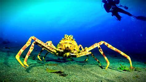 fotos animales marinos top 10 terrorificos animales marinos youtube