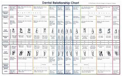 tooth charting diagram sheet symbol meanings related keywords sheet