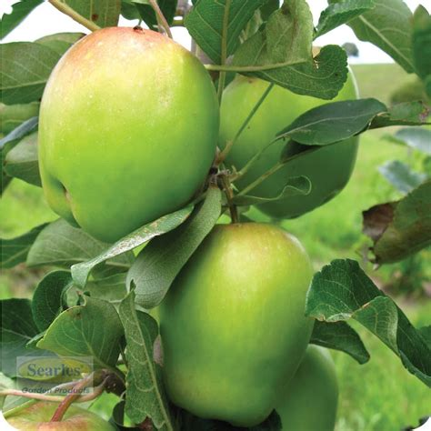 fruit tree care 29 best fruit tree care watering images on