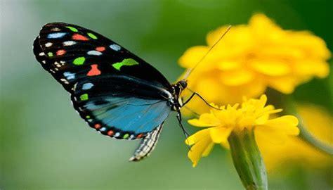 imagenes de dos mariposas juntas list of synonyms and antonyms of the word mariposas imagenes