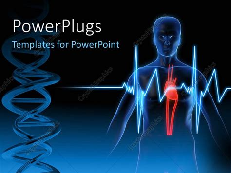 Powerpoint Template Anatomy Depiction Of A Human Heart Anatomy Powerpoint Templates