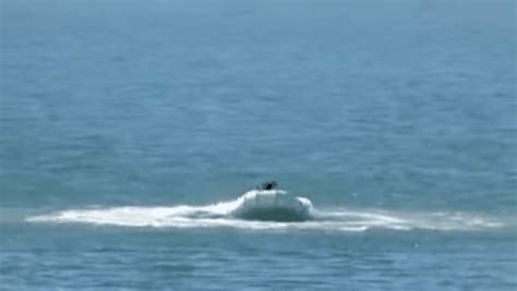 dog driving boat video dog stranded on out of control dinghy takes wild ride