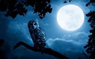 Blue Moon 7 03 Ct when should you sleep