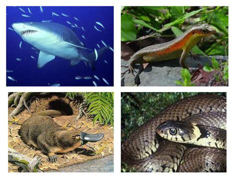 contoh perkembangbiakan hewan secara ovovivipar contoh o