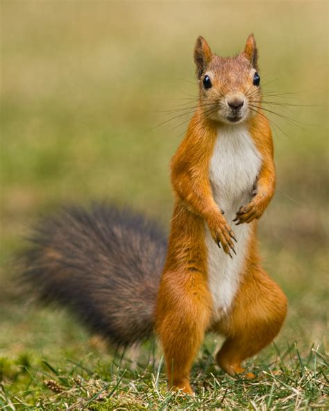 squirrel facts kidspressmagazine com