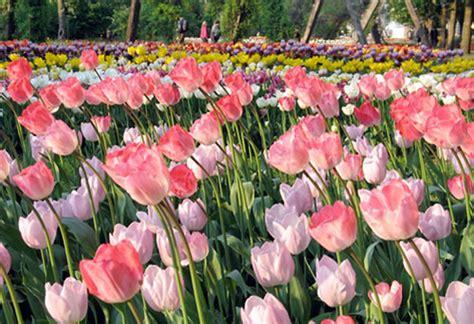 Britzer Garten Tulpenschau by Tulpenschau Im Britzer Garten Maikitten