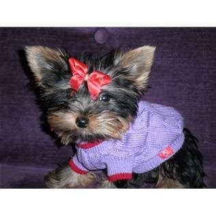 yorkie carry bag pin by christiancrystals on yorkies