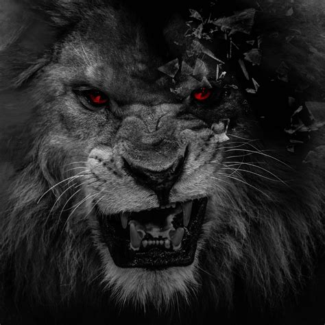 wallpaper black lion black lion wallpaper