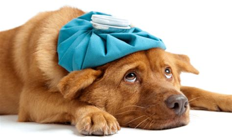 do dogs get sick does your seem unwell lover s news
