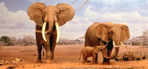 imagenes animales relacionandose 191 conoces la evoluci 243 n de los elefantes las especies