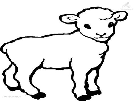 sheep coloring page free coloring pages of and