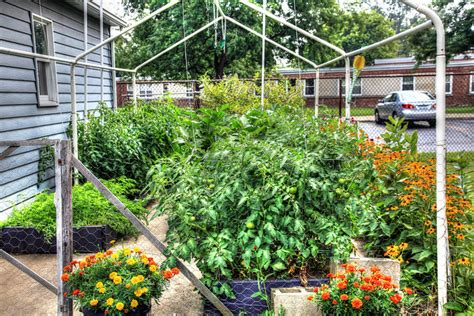 starting your own vegetable garden how to start a vegetable garden