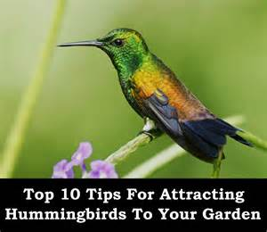 attracting hummingbirds using the best loved flowers