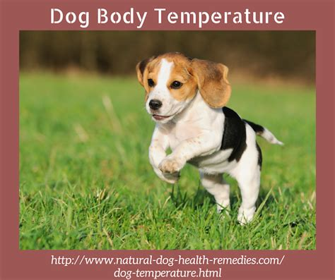 normal temperature for dogs normal temperature and fever how to take a s temperature and pulse