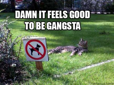 mp3 download damn it feels good to be a gangsta image 144549 damn it feels good to be a gangsta