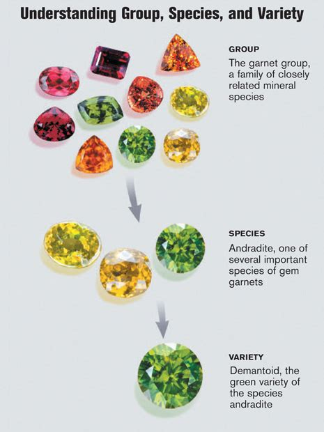 garnet colors a look at january s birthstone garnet featuring tree of