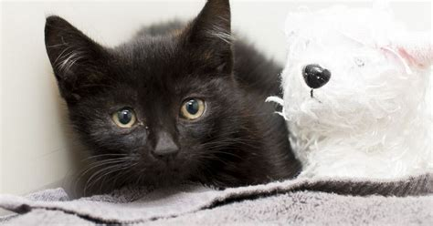 tiny stowaway kitten survives brutal  mile journey crushed  giant recycling truck mirror