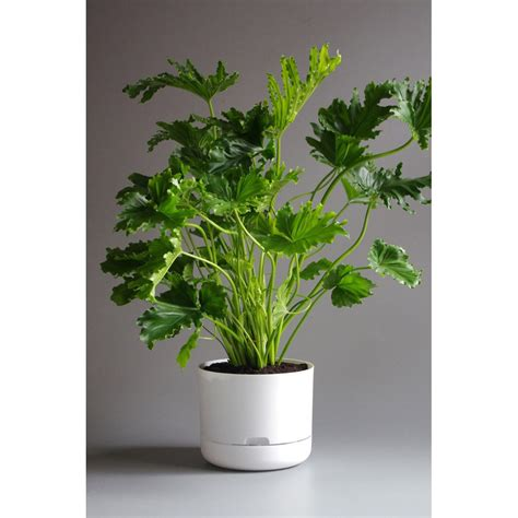 mr kitly decor self watering plant pots cool hunting mr kitly self watering plant pot 25cm white plantandpot nz