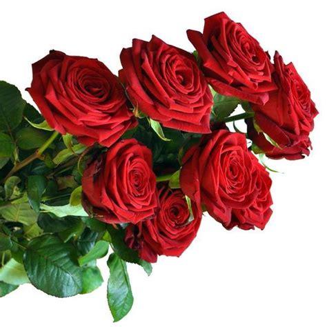 fiori a gambo lungo tutti i prodotti acquista fiori a piacenza
