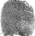 a fingerprint pattern quizlet fingerprint patterns characteristics flashcards quizlet