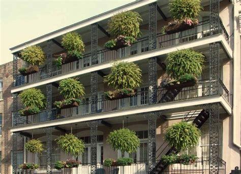 alberi da vaso per terrazzo piante da terrazzo guida completa alla coltivazione e cura