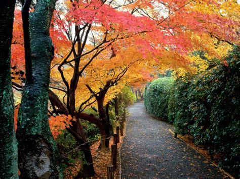 Autumn Cool Wallpapers | Ever Cool Desktop Wallpaper Fall Nature Wallpaper