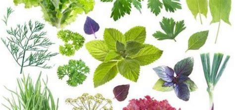 imagenes de flores medicinales plantas medicinales archivos las flores y plantas