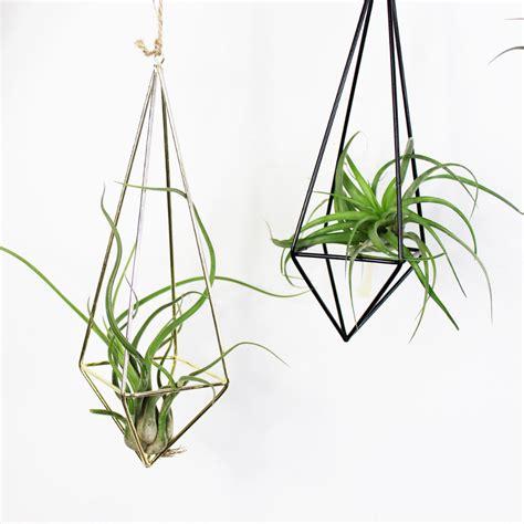 hanging air plant a freestanding hanging tillandsia air plants rack metal