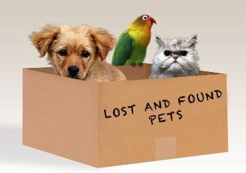 lost and found dogs humane society of harrisburg home