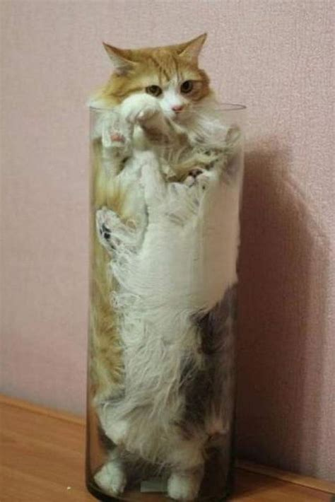 10 Funniest Cat Photos by Cats Part 309 40 Pics 10 Gifs Amazing Creatures