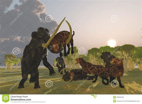 Mammoth And Saber Tooth Cat Royalty Free Stock Photos ...
