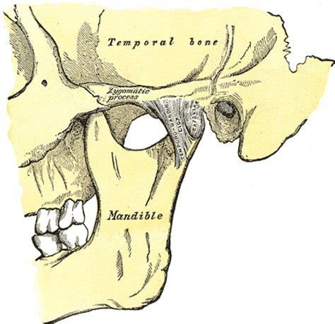 les d 233 sordres temporo mandibulaire chiroenergie