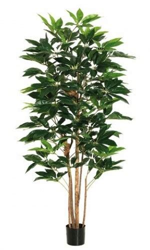 types of topiary trees camellia topiary tree 9ft types of topiary