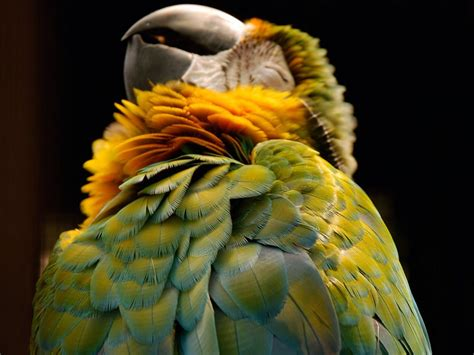 amazing animal pictures  national geographic july