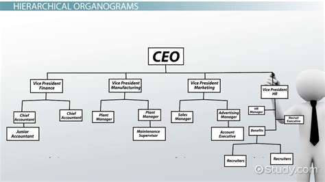 what is an organogram definition structure exle