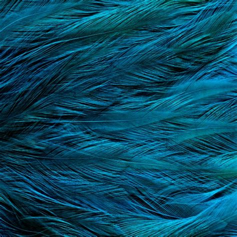 %name Peacock Blue Color   Clipart   Colorful Peacock