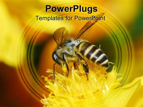Powerpoint Template A Honey Bee Sucking Nectar From A Yellow Flower 16508 Bee Powerpoint Template