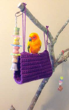 bird beds green cheek conure on pinterest conure parrots and tent