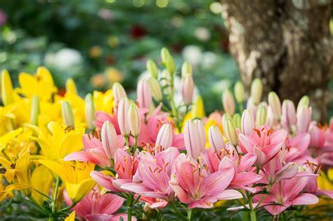 fiori gialli primaverili fiori primaverili a tutto colore e profumo