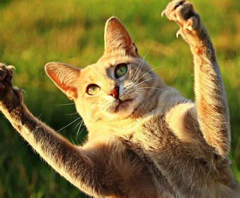 was vertreibt katzen aus dem garten wie kann katzen aus dem garten vertreiben best 28 images