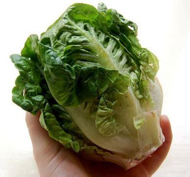 Benih Selada Lettuce Gem Mrfothergills Kemasan Asli benih selada gem jual tanaman hias