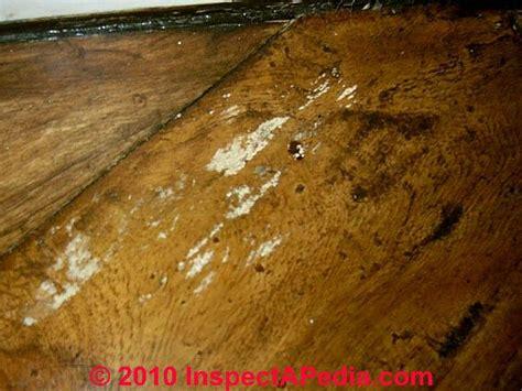 wood flooring mold how to clean mold of hardwood flooring