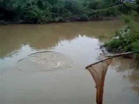 kaki pancing sungai liku