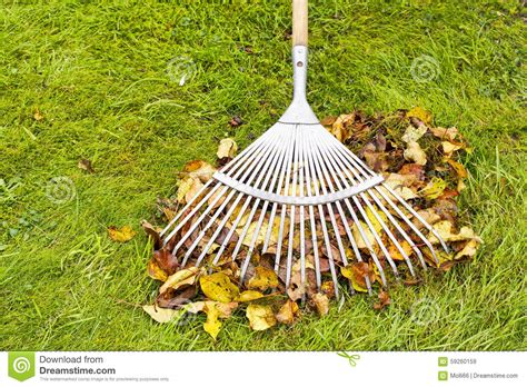 Landscape Rake Leaves Autumn Leaves And Rake Cleaning On Green Lawn Stock Photo