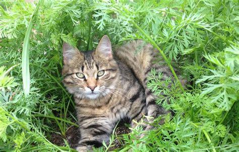 katzen aus garten fernhalten katzen artgerecht vom garten fernhalten agila
