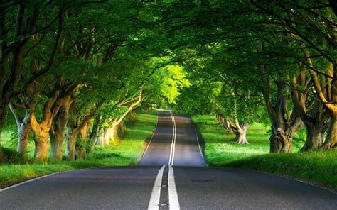 Landscape Image Definition Green Road Landscape High Definition Wallpaper