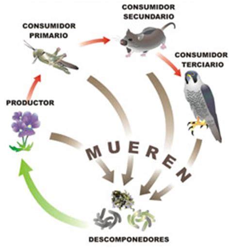 cadenas alimentarias y sus elementos cadenas alimenticias relaciones entre seres vivos espa 241 a
