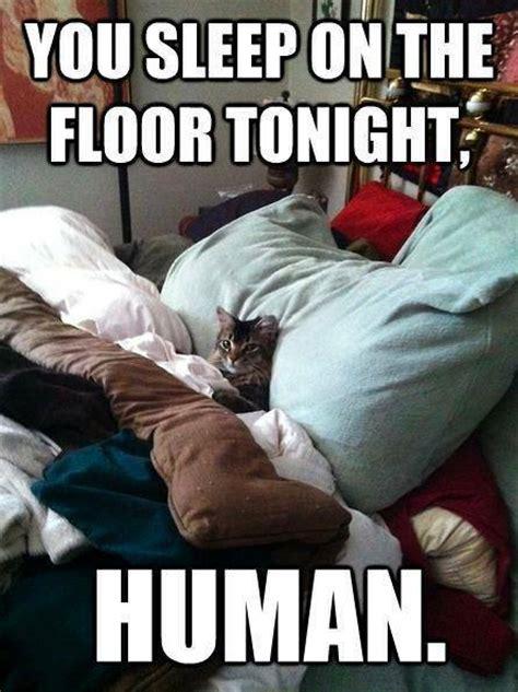 Funny Memes About Sleep - animal memes you sleep on floor funny memes