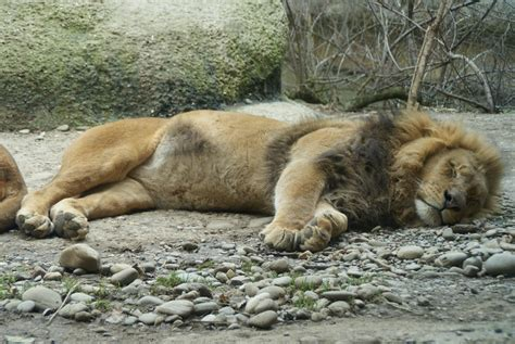 Zoologischer Garten Basel Preise by Ausflug Zum Zoo Basel Wolf U Li