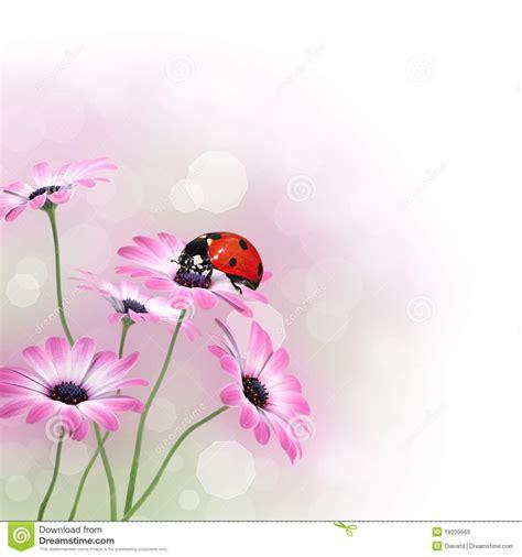 fiore con la z fiori della sorgente con la coccinella immagini stock